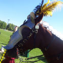 Horse in Barding